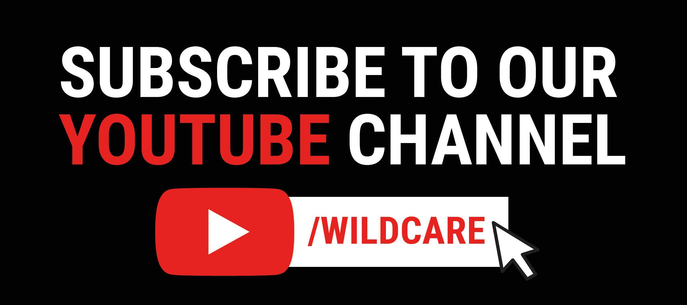 WC Youtube