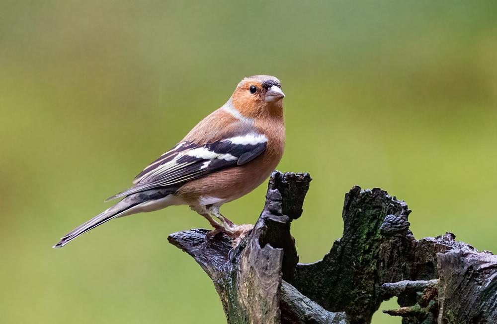 Choosing Bird Nest Boxes