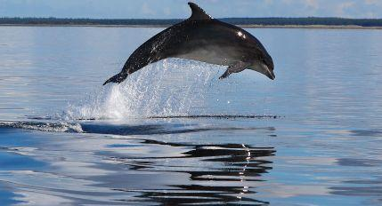 WDC - Whale and Dolphin Conservation