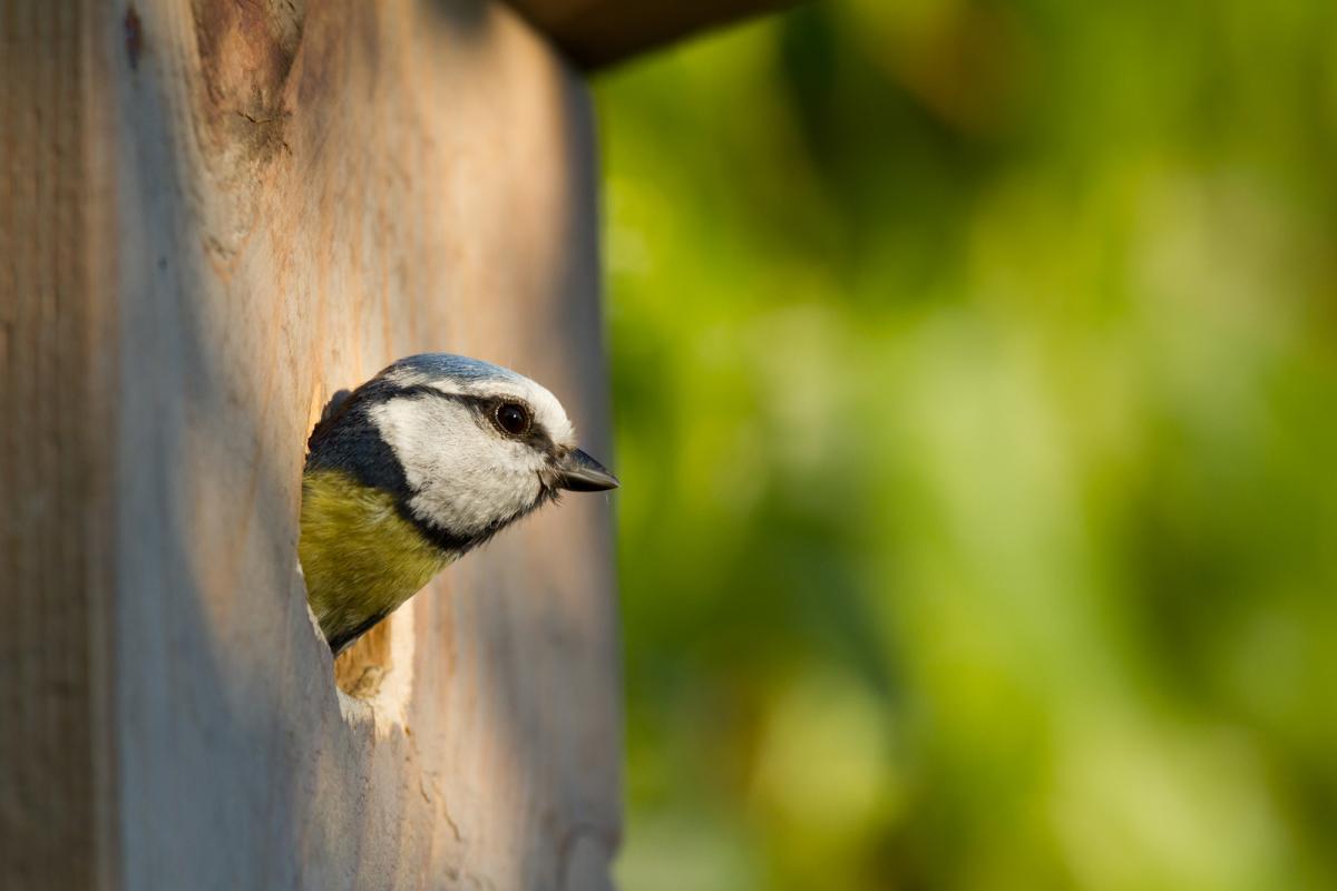 Choose The Right Bird Box For Your Garden