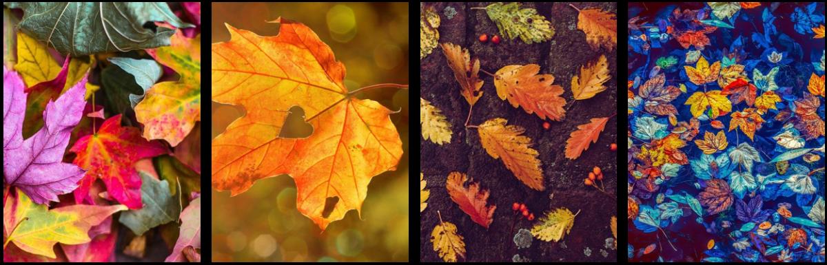 National Tree Week! Leafy Celebrations