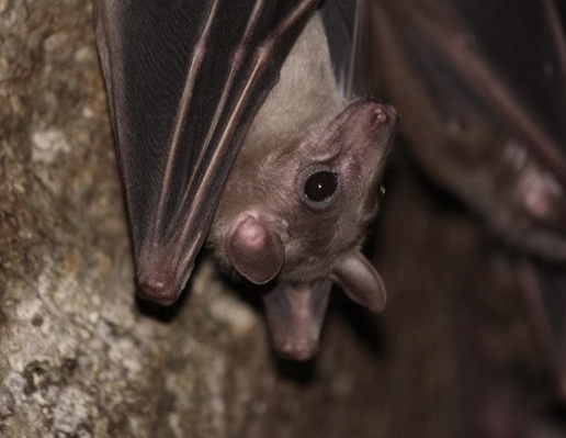 Our top Frequency Division Bat Detectors and their applications