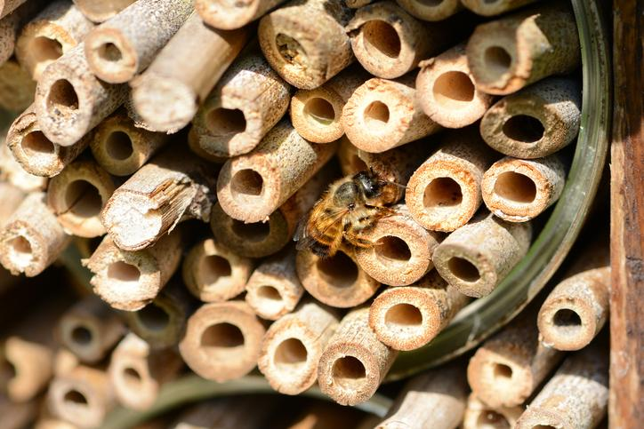 Solitary Bees: 8 facts to know plus an identification resource