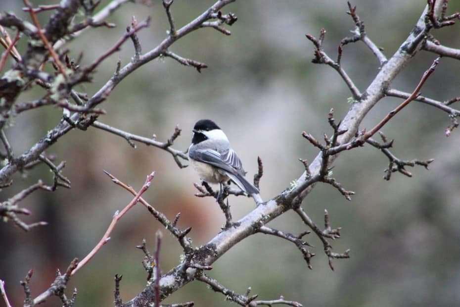 Birdsong - living alongside nature