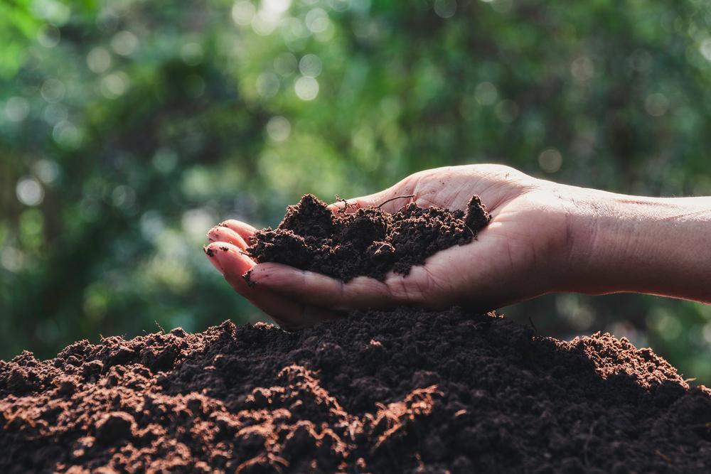 World Soil Day - underneath your feet