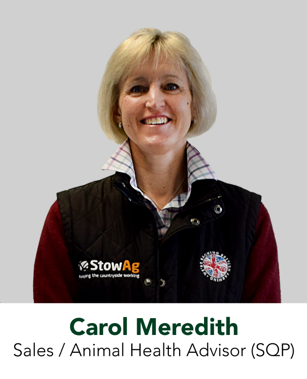 Carol Meredith